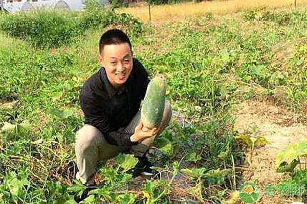 农民蔬菜种植
