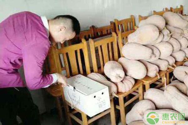 农民蔬菜种植致富