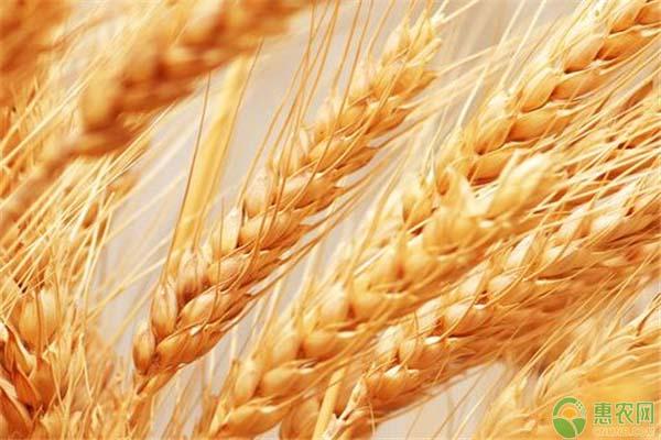粮食补贴政策