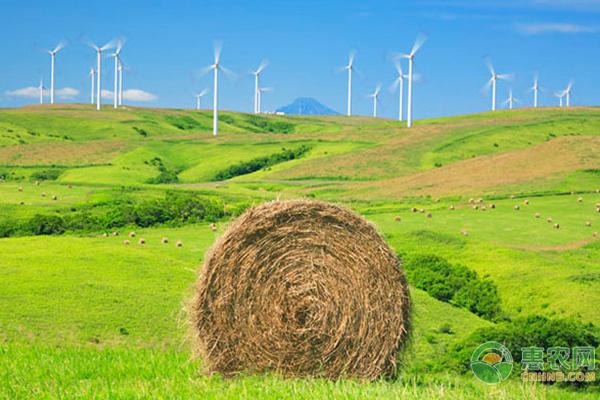 农民新福利,正规申报秸秆补贴