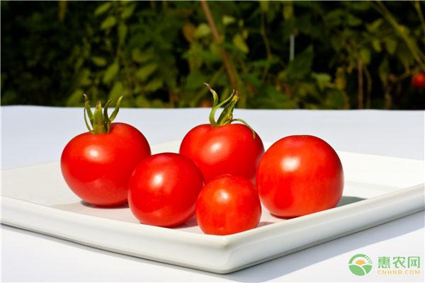 西红柿功效