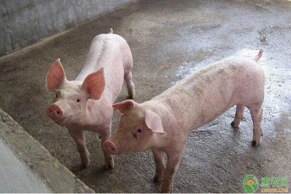 猪肉价格趋势