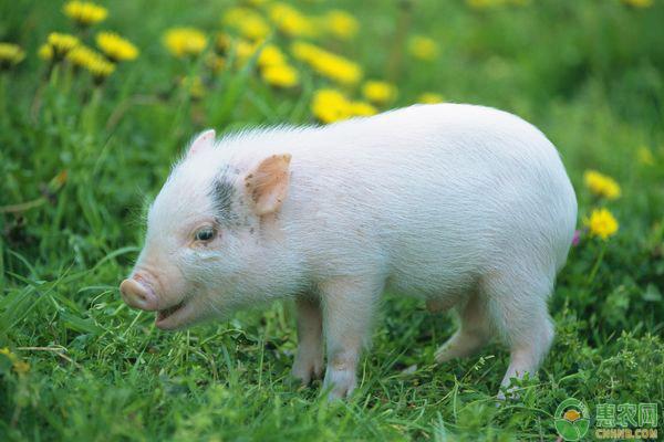 猪肉价格行情