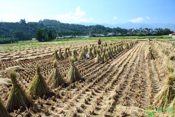 农村创业项目