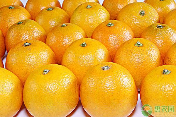 柑橘最新价格