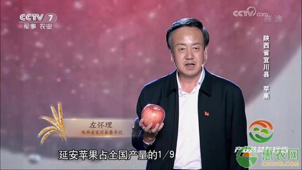 陕西省宜川县委书记左怀理为家乡苹果代言
