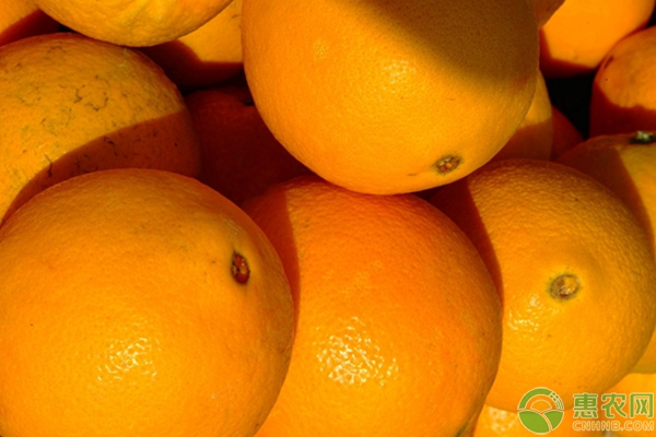 脐橙价格行情