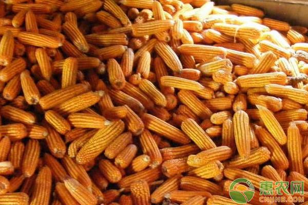 今日玉米价格多少钱一斤?2018下半年玉米价格最新走势分析