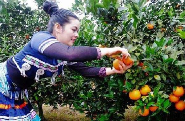 """第四届崀山脐橙文化节""""橙""""意来袭 惠农网等电商平台联动造势"""