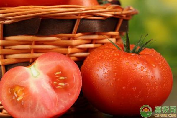 亚博-天气利好,西红柿价格行情会有哪些变化?(附最新西红柿价格)