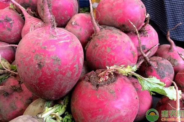 亚博-青萝卜多少钱一斤?11月最新萝卜产区价格行情
