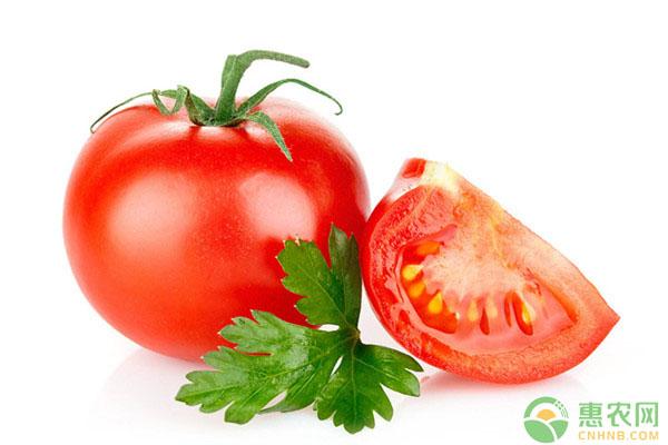 西红柿最新价格