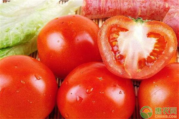 西红柿最新价格行情