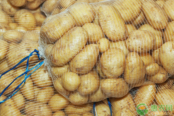 2018年全国最新土豆主产地价格行情