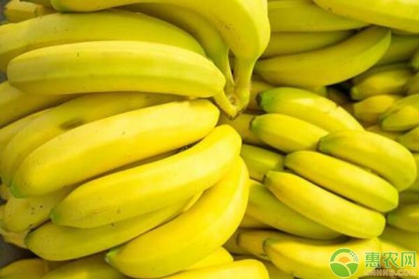 2018年最新香蕉产区价格行情汇总