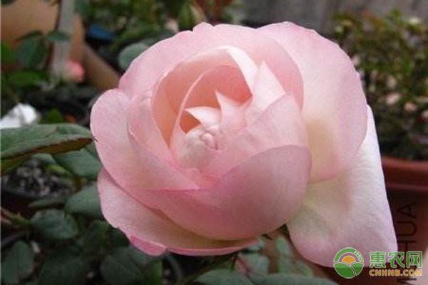 家庭盆栽推荐:养什么花卉既能观赏又能净化空气?
