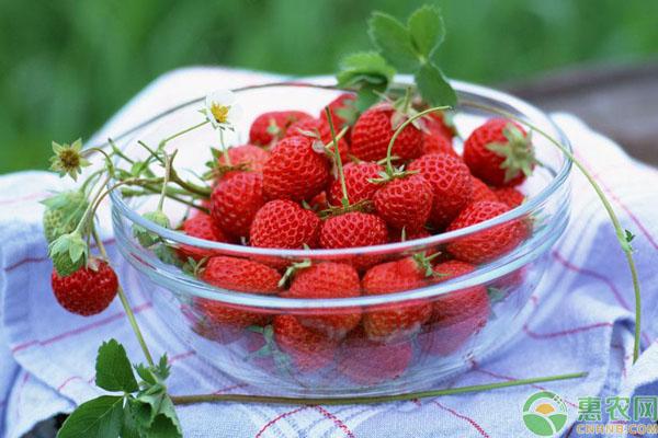 草莓收购价格