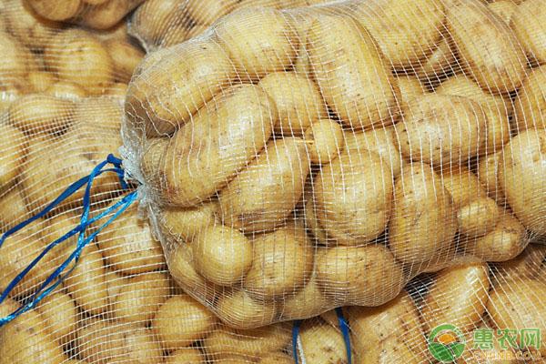 土豆大量上市,价格如何?