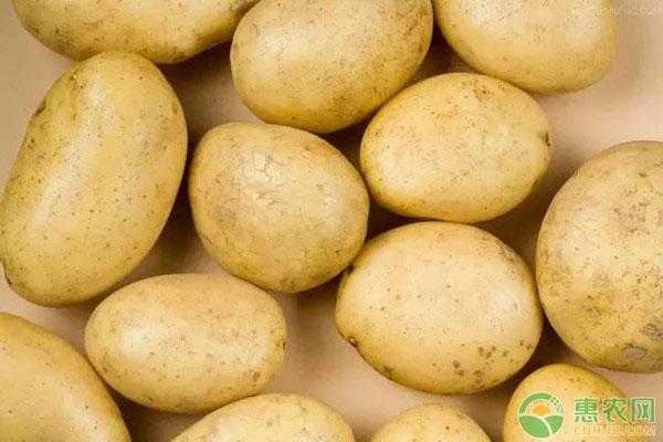 2018最新土豆价格行情分析