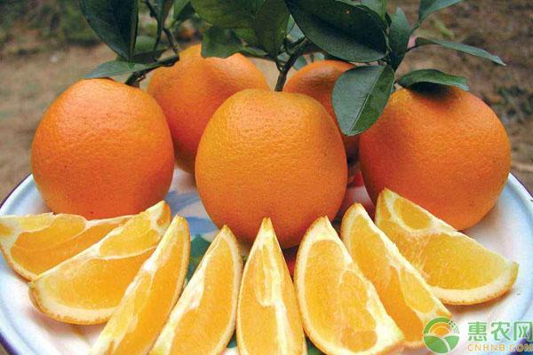 脐橙公母区分