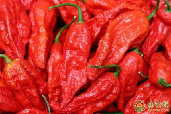 辣椒有哪些好处?辣椒食用功效及食用禁忌