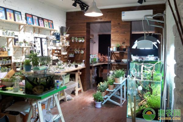 小城市卖水草,成本低利润高