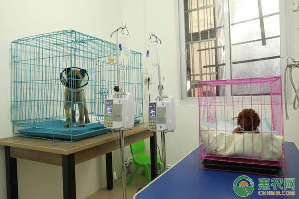 宠物医院在小城市很少,但是很多人都养了宠物,利润大