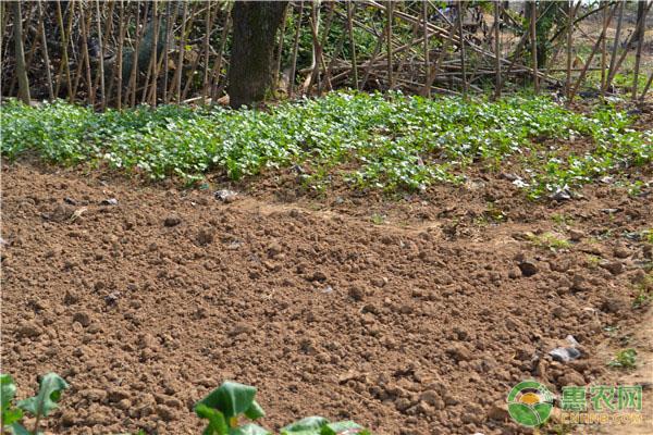 羊粪当农家肥有什么好处?