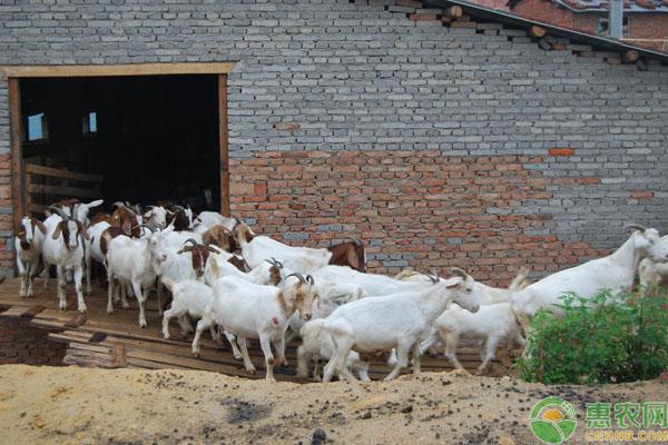 2019养羊补贴
