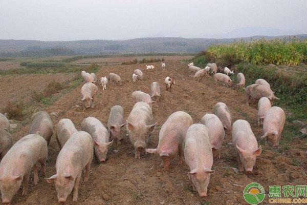2019养猪补贴
