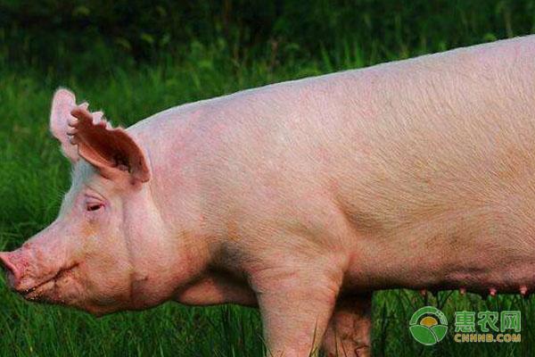 今日生猪价格行情如何?2018年末各地猪价行情预测