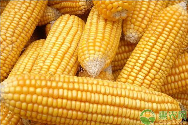 2019年1月2日国内玉米主产区市场价格行情预测