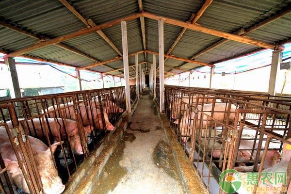 黑龙江非洲猪瘟
