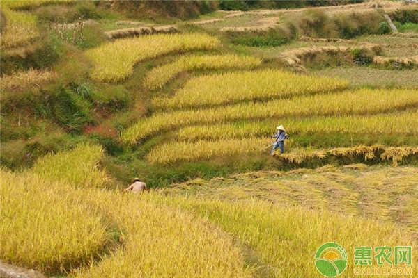 农村土地保护补贴
