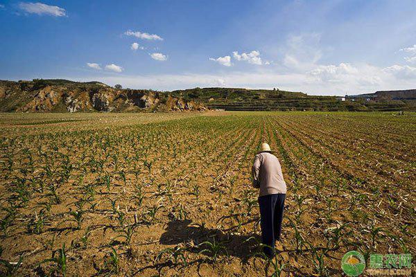 农村土地保护补贴政策