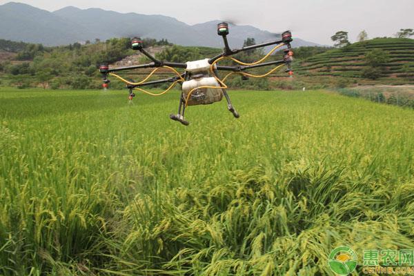 无人机直播水稻问题
