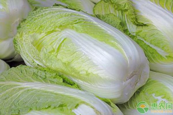 今日最新白菜价格行情