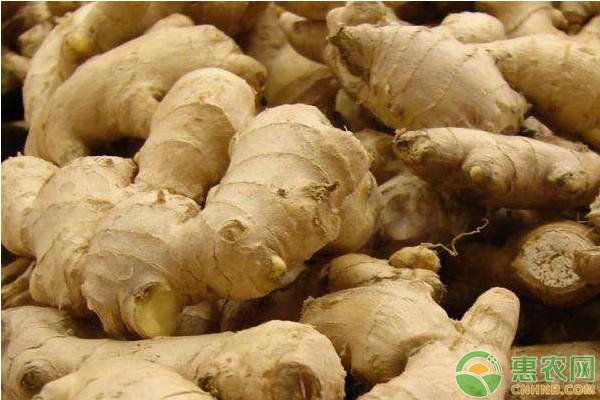 今日生姜价格多少钱一斤?1月11日全国生姜批发市场价格行情