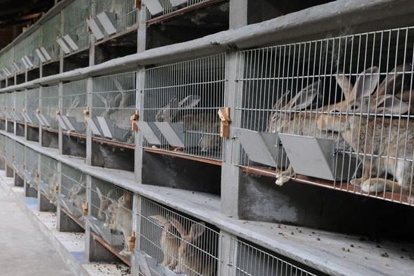 2019养殖兔子赚钱吗?养100只兔子成本及利润是多少?