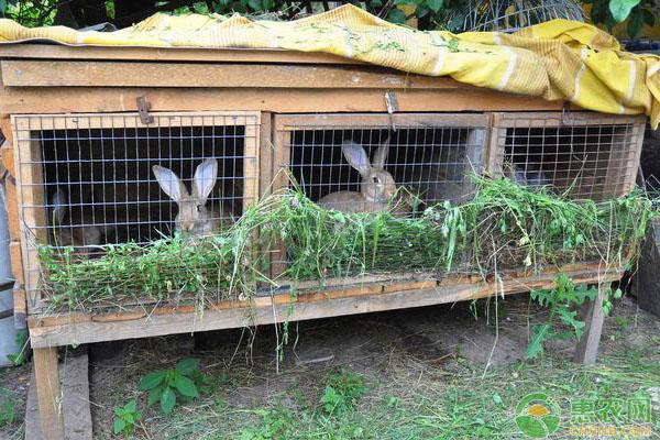 2019兔子养殖