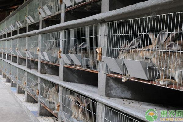 100只兔子养殖成本利润