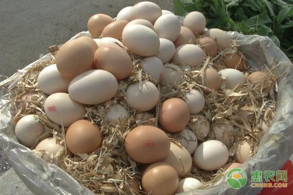 2019年最新鸡蛋价格行情汇总