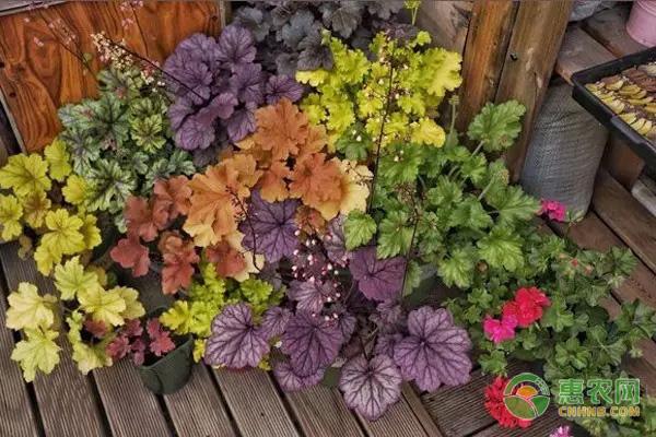 冬天天气冷养什么好?这几种抗寒绿植推荐给你!