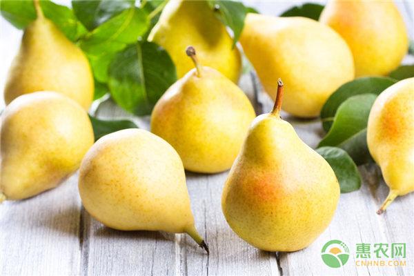 今日梨多少钱一斤