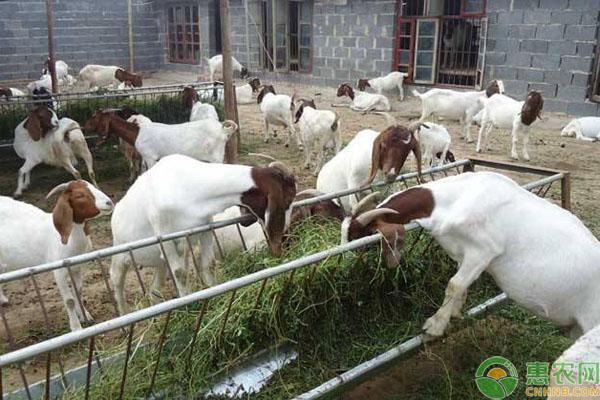 农村三种养殖方式被禁