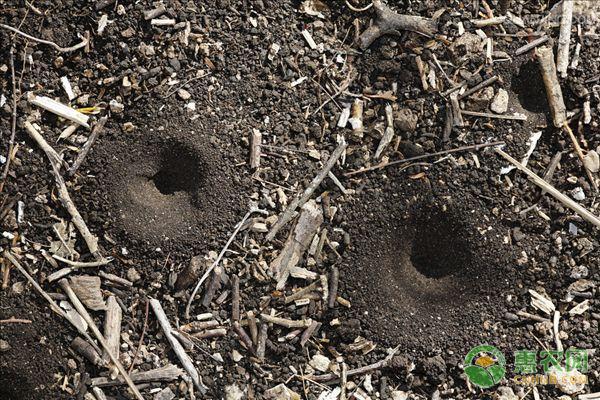 蚁狮多少钱一斤?养殖前景如何?