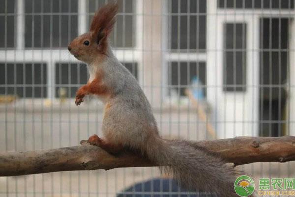 松鼠养殖案例