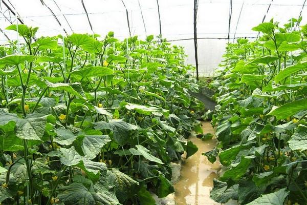 2019年蔬菜种植前景如何?这些问题大家要引起重视!