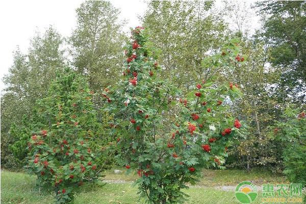 果树缺硼锌的症状及施肥技术