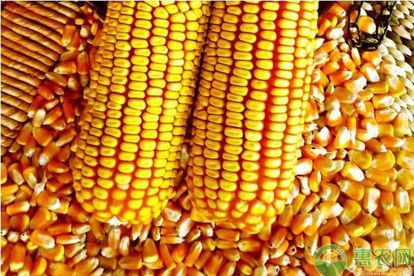 2019年2月份全国玉米价格最新行情预测
